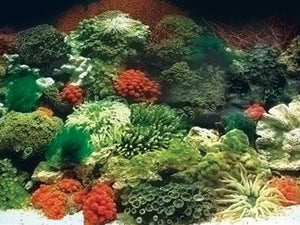 AQUA ONE Background 48cm Coral Black & Plant W Blue