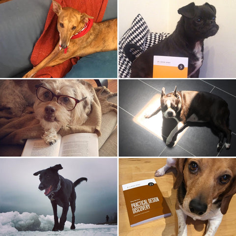 Collage of dog photos