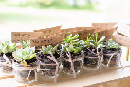 Succulents as Wedding and Baby Shower Favors