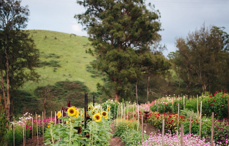 floral-by-nature-farm