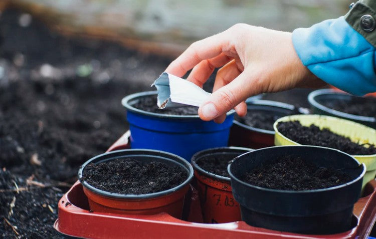 Watering Your Soil