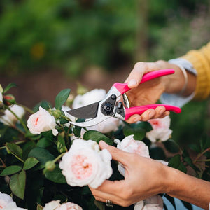 Pink Secateurs 225mm