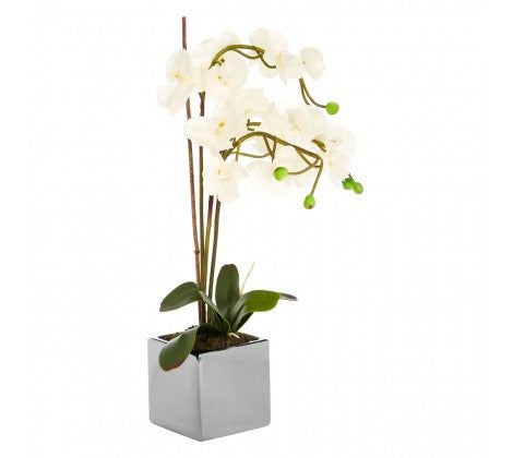 White Orchid Plant with Silver Ceramic Pot