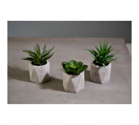 Fiori Succulents in Geo Cement Pots - Set of 3