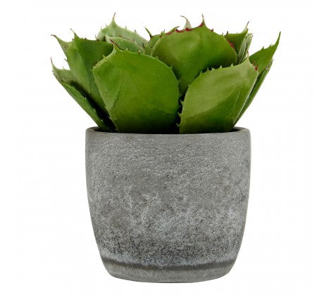 Fiori Large Succulent With Cement Pot