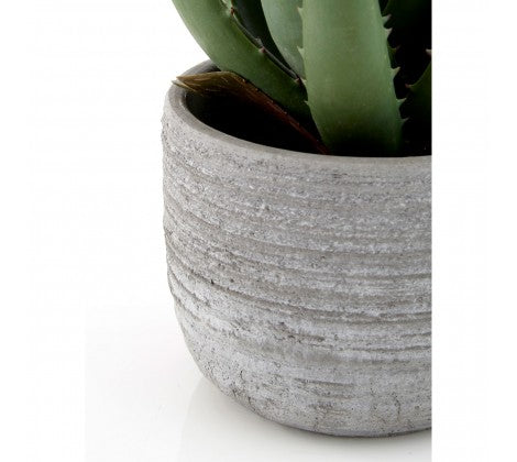 Fiori Aloe Vera with Large Cement Pot