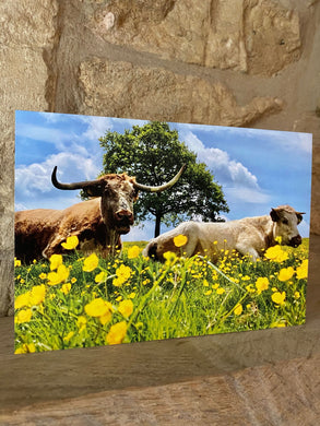 Cow greetings card (cot cards)