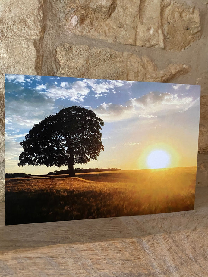 Sunset with tree greetings card (cot cards)