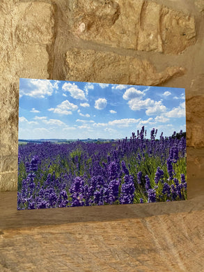 Lavender field greetings card (cot cards)