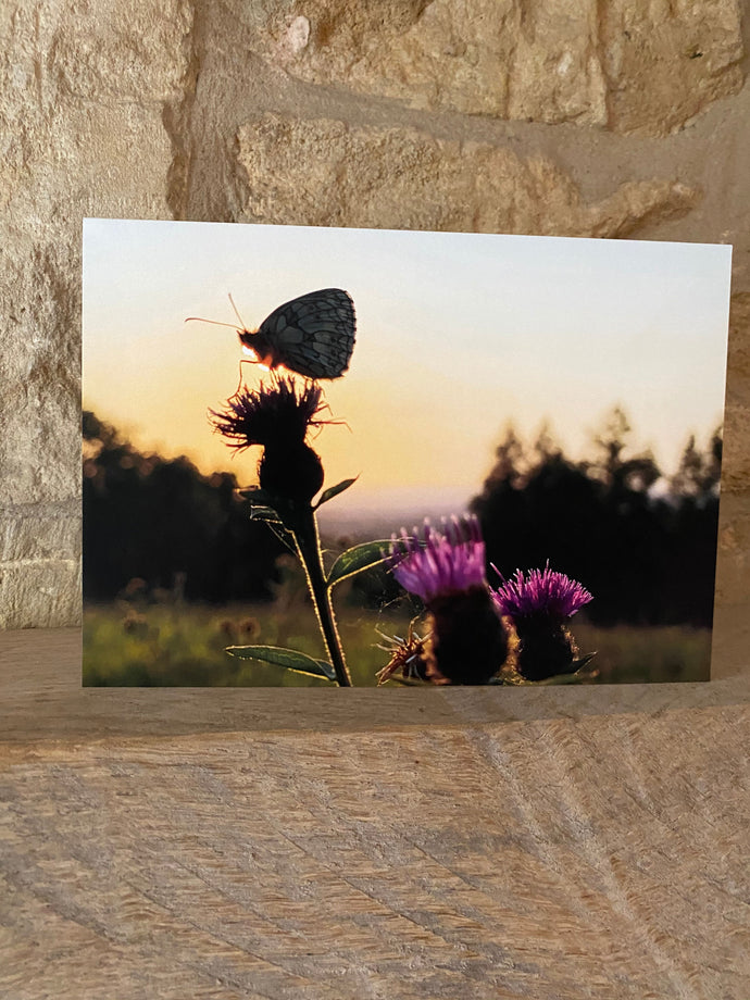 Butterfly on thistle greetings card (cot cards)