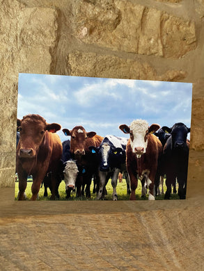 Cows greetings card (cot cards)