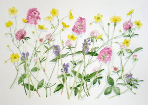 "Alison Vickery ""Wild Flowers - Minchinhampton  Common"""