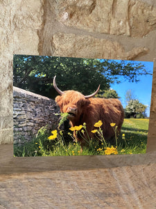 Highland cow greetings card (cot cards)