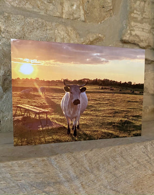 Cows and clouds - Michinhampton common greetings card (Cots cards)