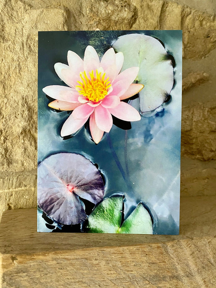 Water Lilly greetings card (Cot cards)