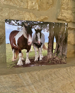 Horses - Minchinhampton common greetings card (Cots cards)