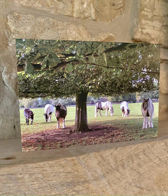 Minchinhampton common greetings card (Cots card)