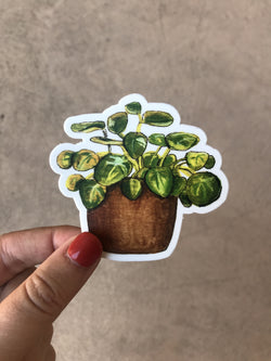 Pilea Houseplant Vinyl Sticker