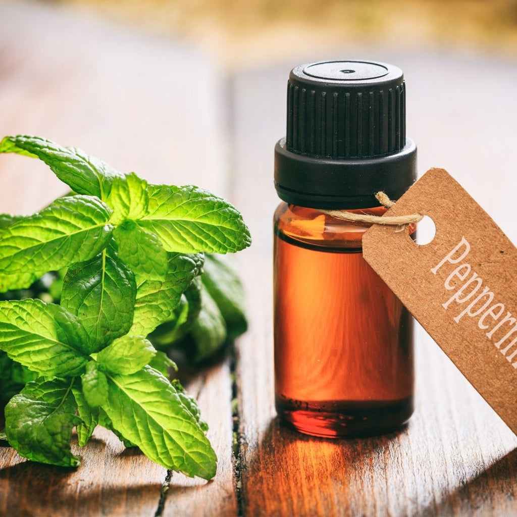 5 Of The Best Smelling Essential Oils for Your Home