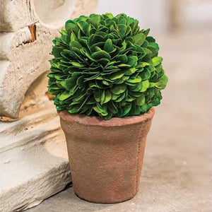 Potted Boxwood Ball, 6.5""
