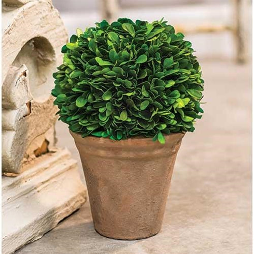 Potted Boxwood Ball, 9.5""