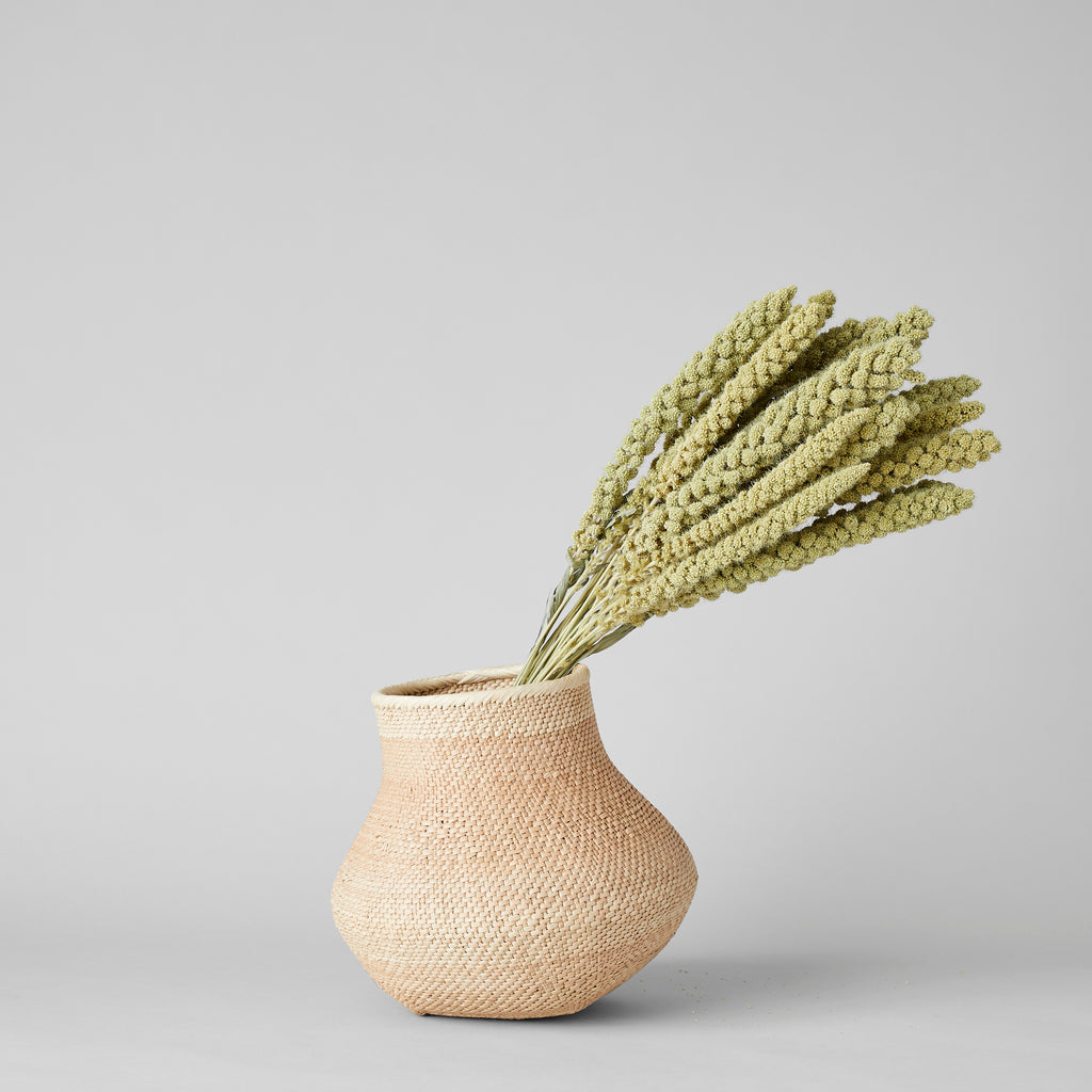 Dried Spray Millet - Bloomist
