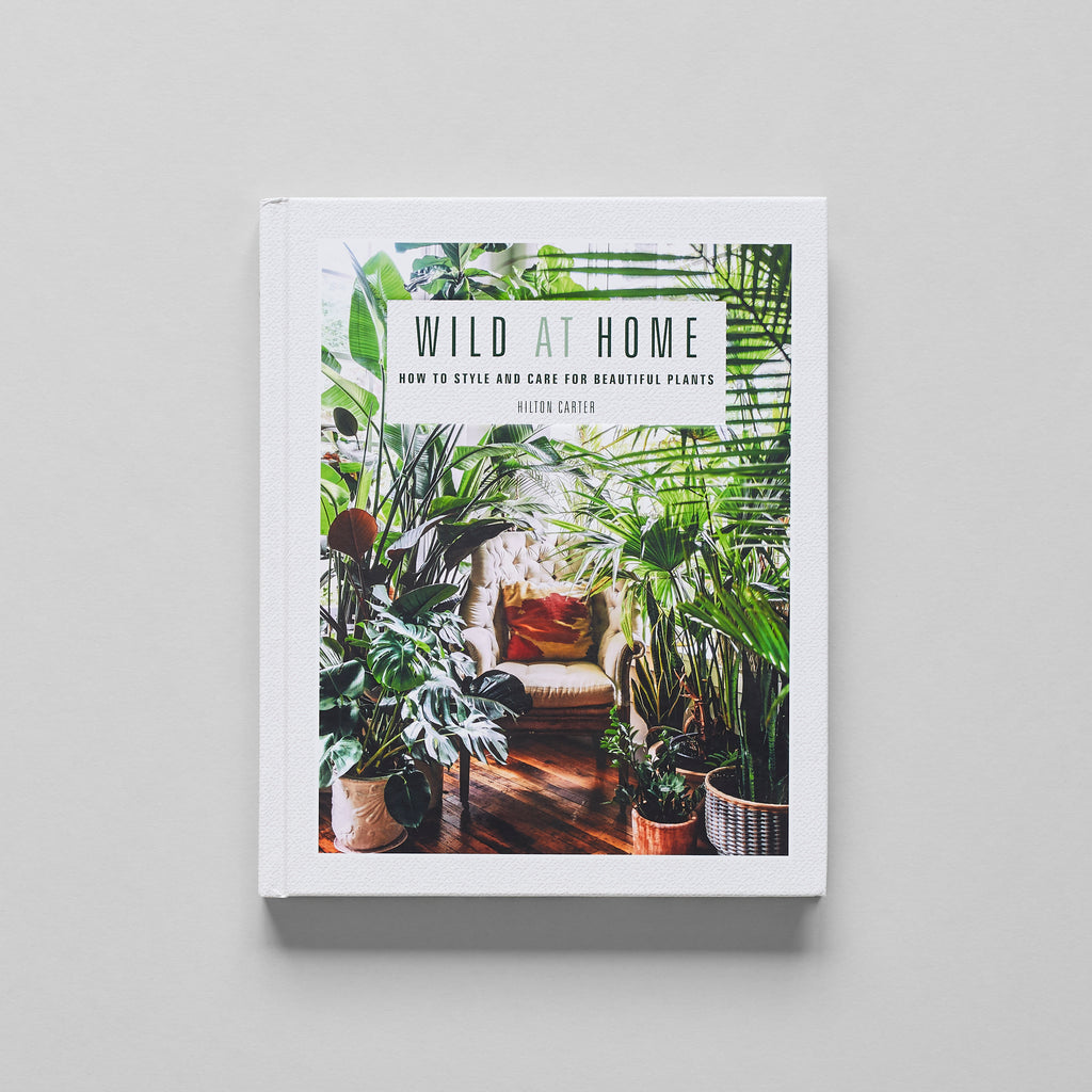 Wild at Home: How to Style and Care for Beautiful Plants - Bloomist