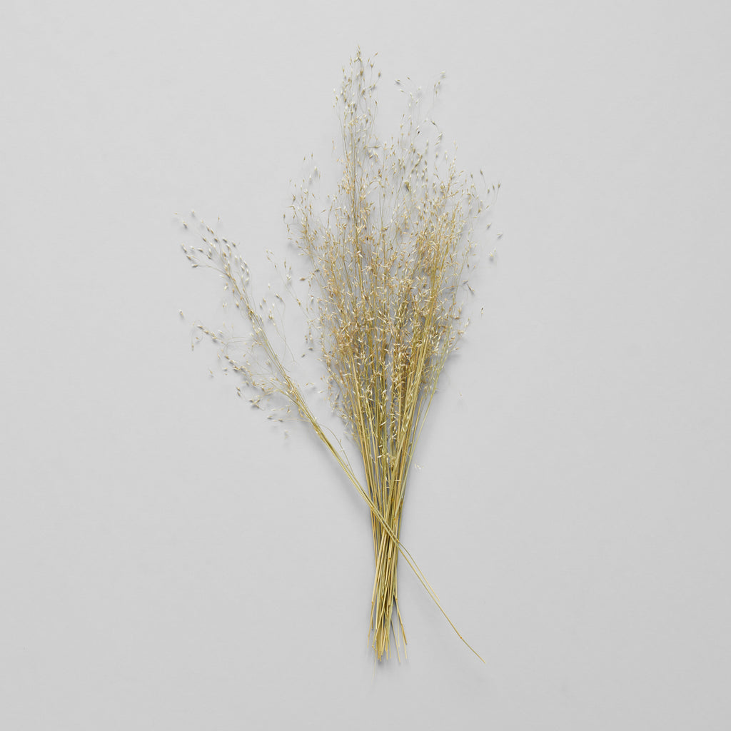 Dried Indian Ricegrass - Bloomist