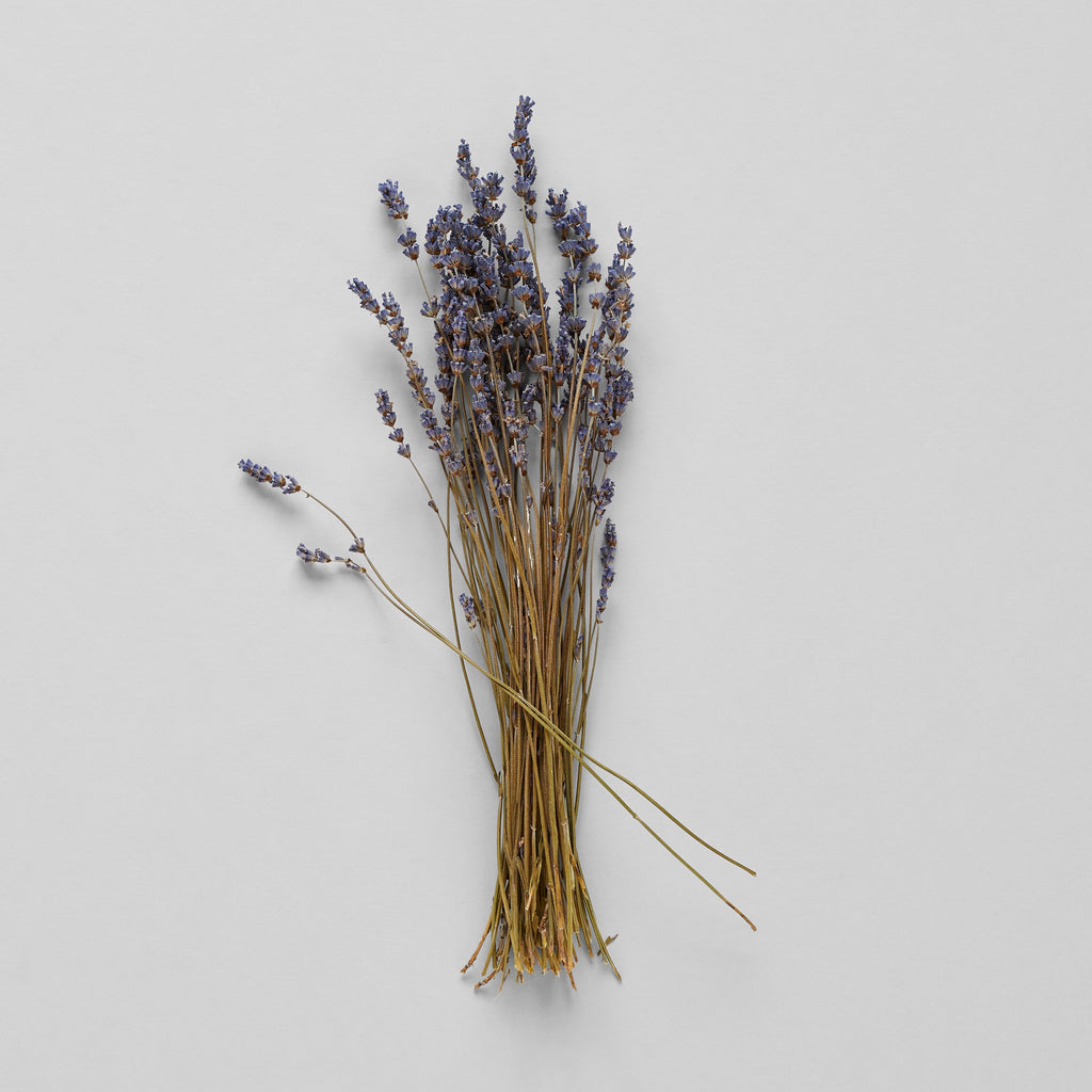 Dried Lavender - Bloomist