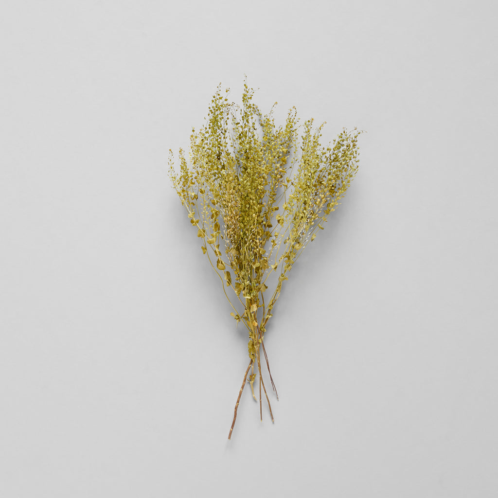Dried Pepper Grass - Bloomist