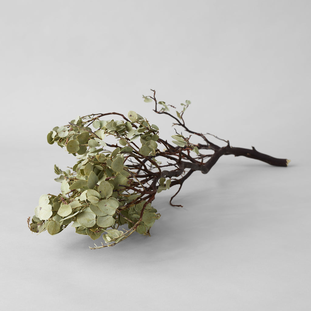 Dried Manzanita with Leaves - Bloomist