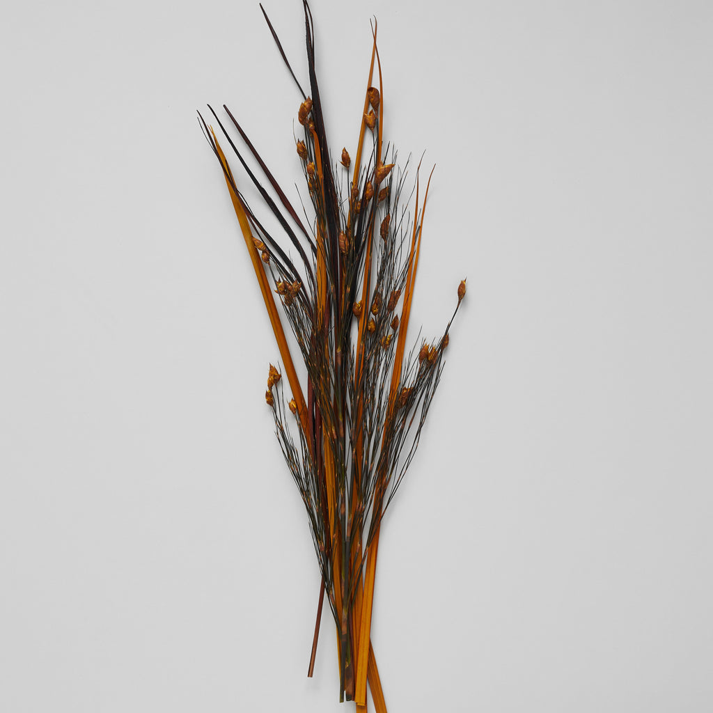 Dried Bell Grass With Gold Pods - Bloomist