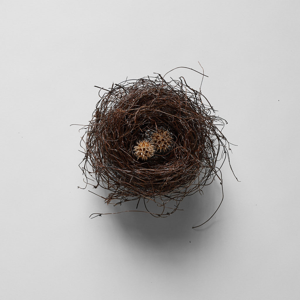 Bird's Nest - Bloomist