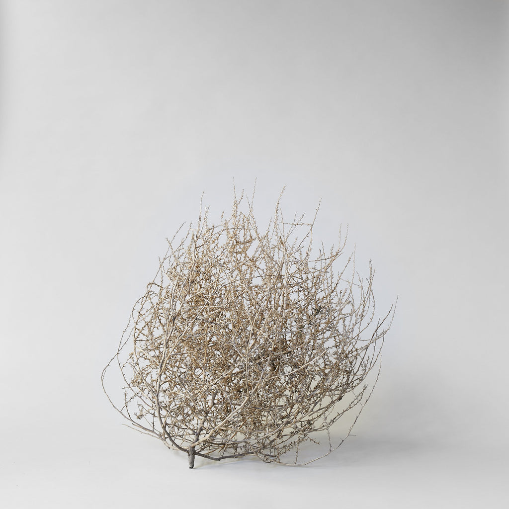 Dried Tumbleweed - Bloomist