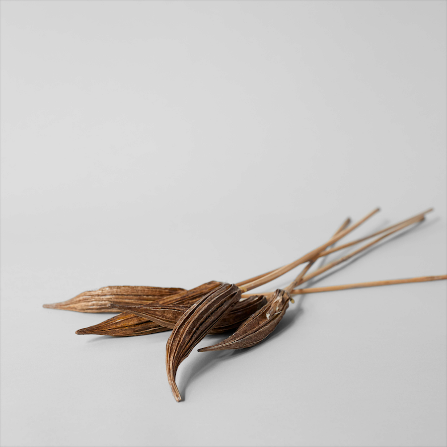 Dried Bronze Okra Pods - Bloomist