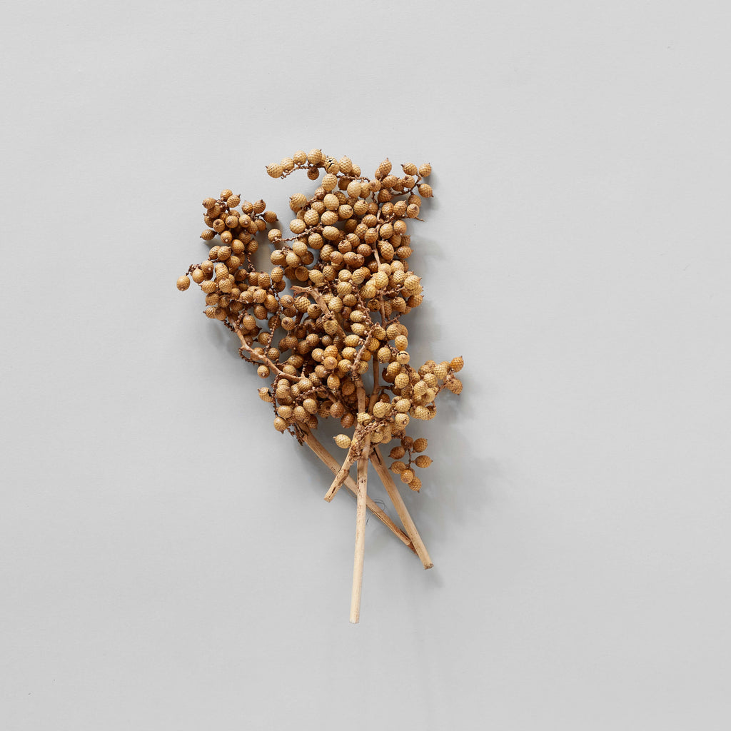 Dried Natural Canella - Bloomist