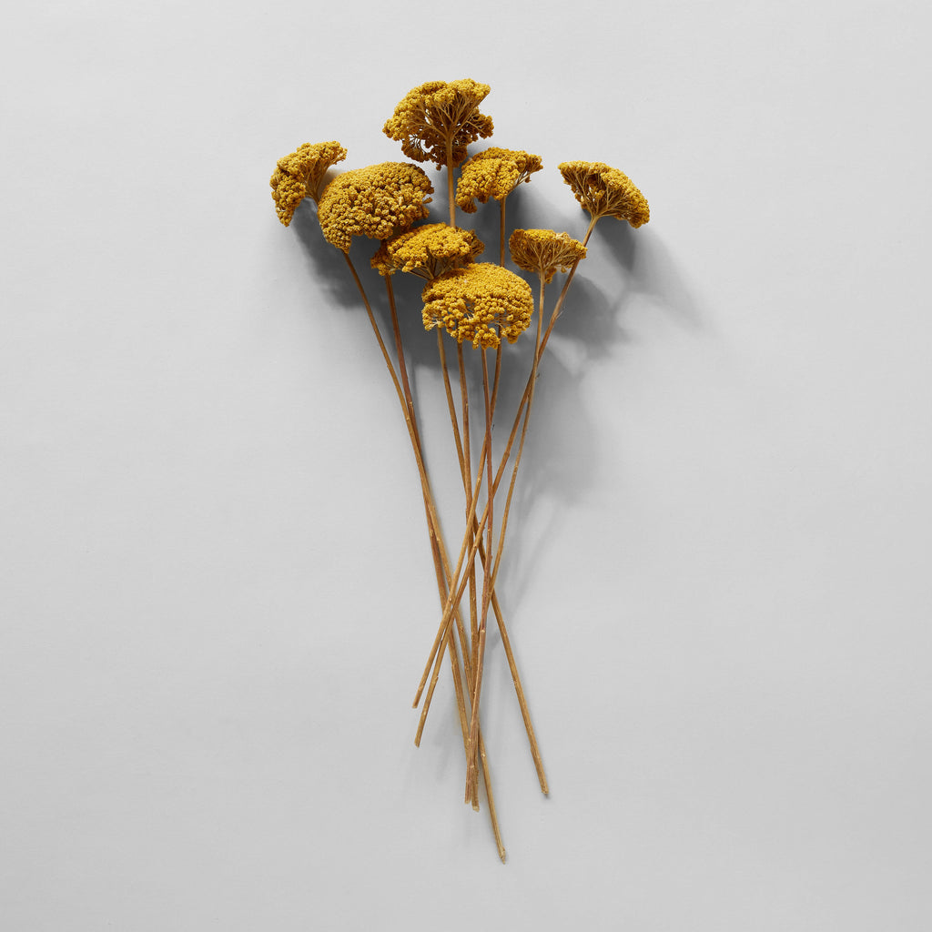 Dried Natural Yarrow - Bloomist