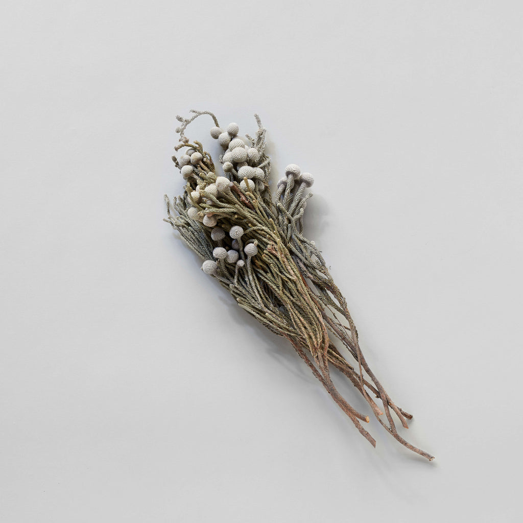 Dried Silver Brunia - Bloomist