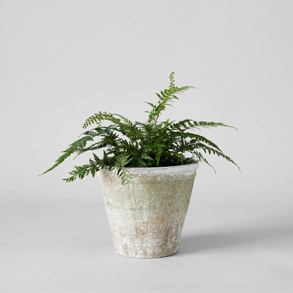 Rustic Ivory Clay Pot - Bloomist