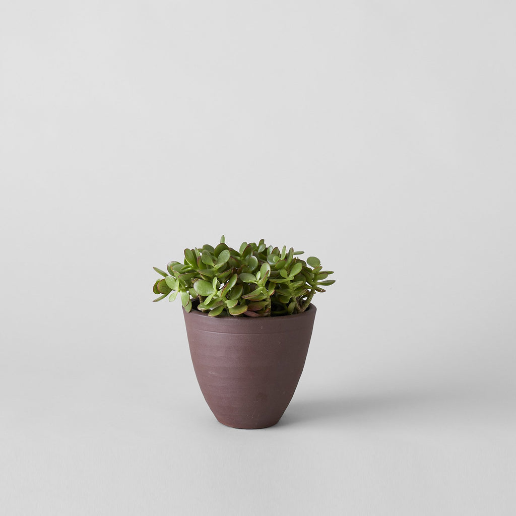 Abelia flat ceramic planter in Bordeaux - Bloomist