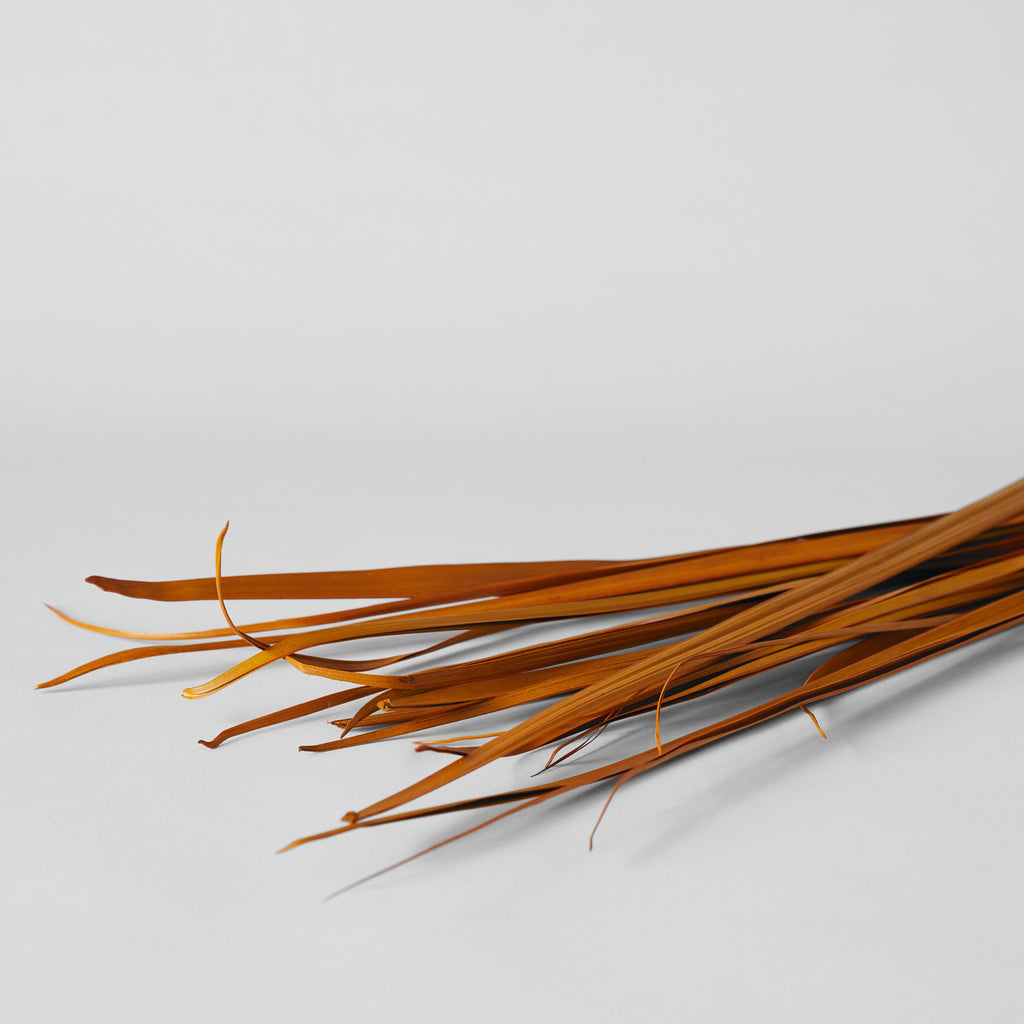 Dried Sable Grass, Aspen Gold - Bloomist