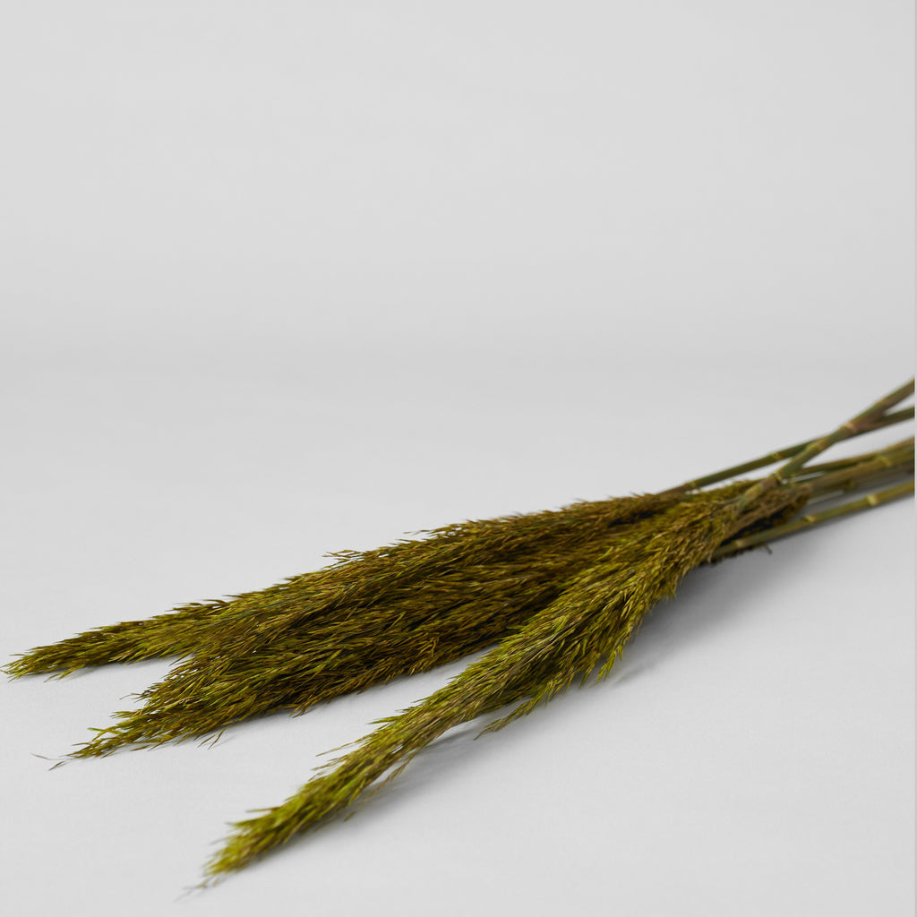 Dried Plume Reed, Green - Bloomist
