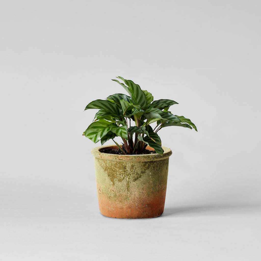 Weathered Garden Pot - Bloomist