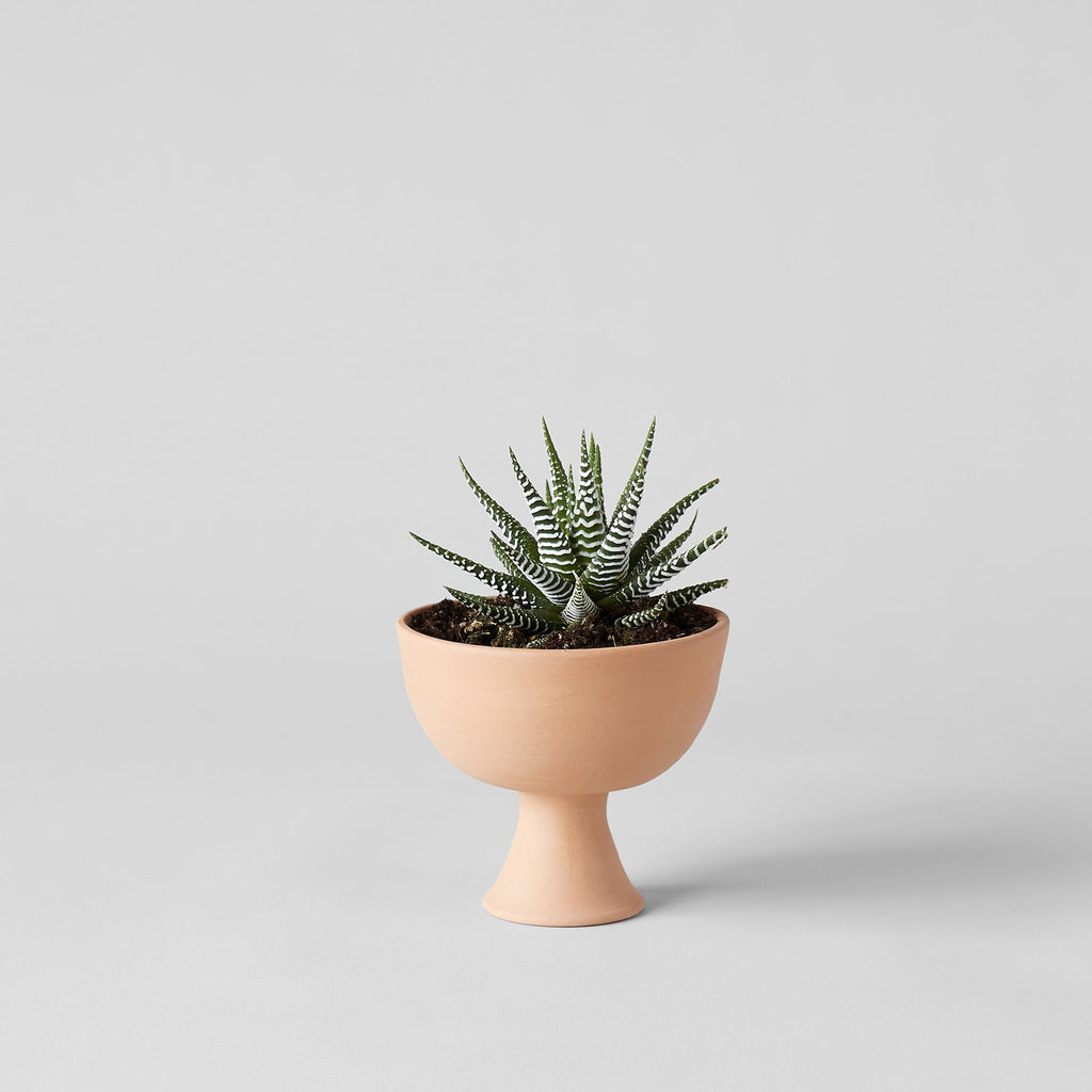 Goblet terracotta planter - Bloomist