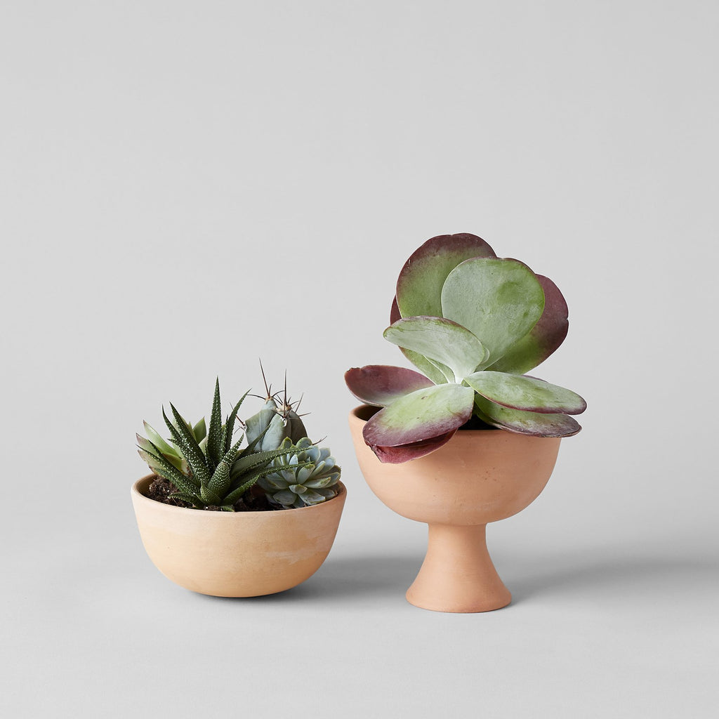 Half Sphere Terracotta Planter - Bloomist