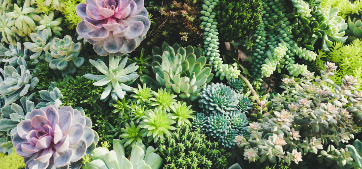 Most Photogenic Succulents