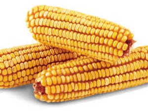 Des Moines Feed - Ear Corn 8-lb