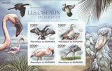 Birds Flamingo Reed Cormorant Pygmy Goose Shoebill Exotic African Palm T