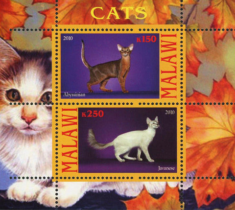 Malawi Cat Pet Domestic Animal Javanese Souvenir Sheet of 2 Stamps Mint NH