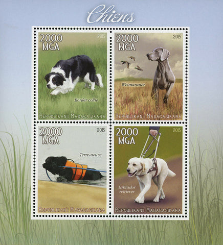 Madagascar Domestic Animal Border Collie Dog Pet Souvenir Sheet of 4 Stamps Mint NH